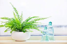 Image result for indoor plants