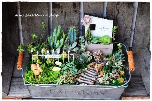 - ガーデニング用品や多肉植物の通販サイト|A.N.S*ナチュラルガーデニング
