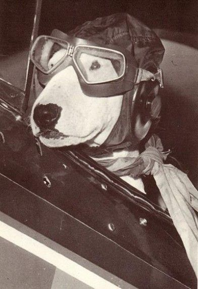Brian griffin's aviation career brought to and end because he was busted for flying under the influence #aviationpilotpictures