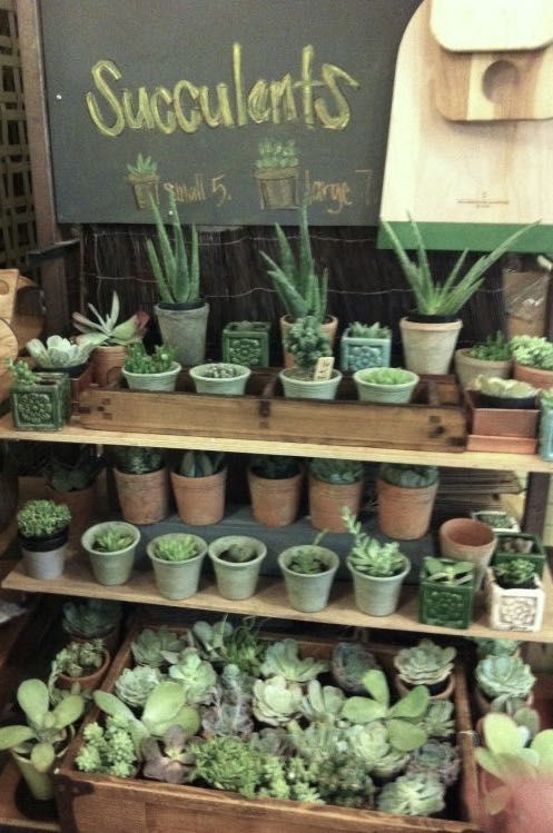 (notitle) – the gardener's shoppe~✿