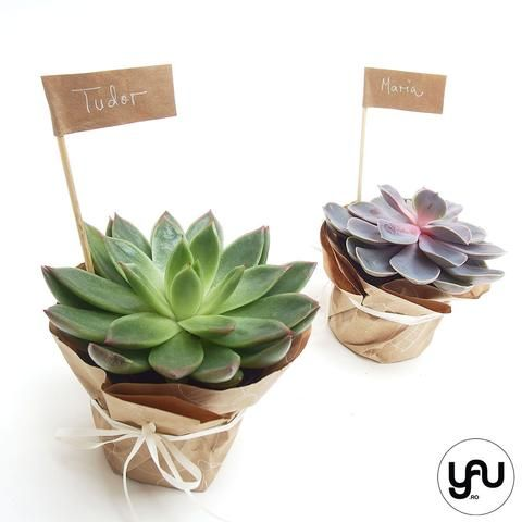 MARTURII plante suculente si hartie kraft - M1 - https://www.yau.ro/collections/marturii-nunta-si-botez?page=1 - yauconcept - elenatoader