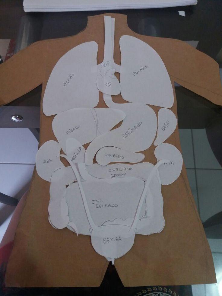 1000 ideias sobre rg os do corpo humano no pinterest for Como criar peces para consumo humano