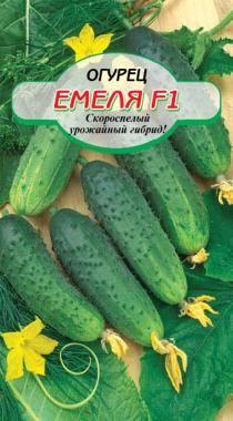 Огурец Емеля F1: характеристика и описание особенностей сорта с фото, отзывы