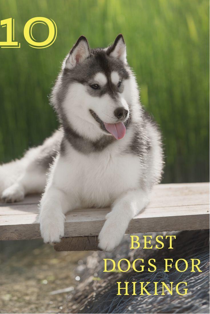 Top 10 Dog Breeds For Hiking Best Dog Breeds Top 10 Dog Breeds