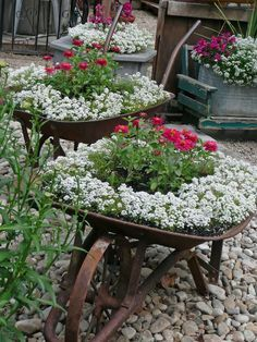What to do with an old wheelbarrow, sit it on a lovely gravel path and plant it with lots of white alyssum & pink zinnias! Wonderful.