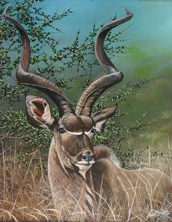 Nico Bulder - Kudu