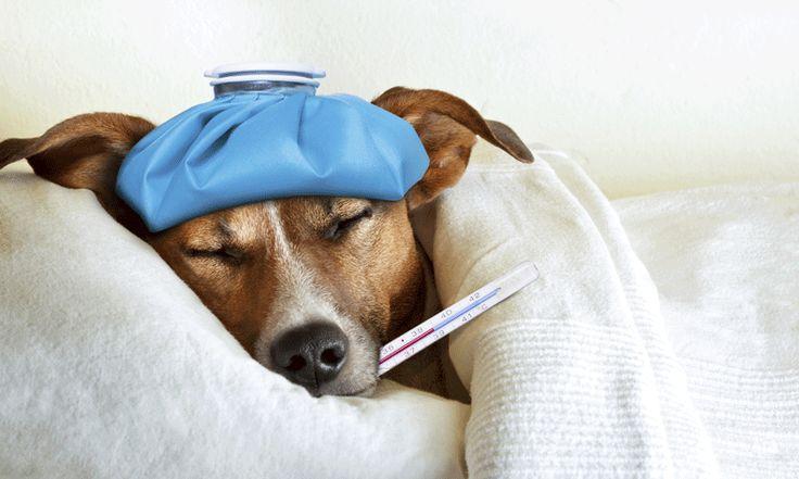 Een paracetamol slikken om de pijn bij koorts te verlichten, heeft volgens nieuw onderzoek uit Nieuw-Zeeland geen enkel nut.