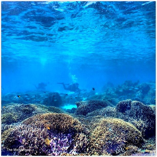 Magnificent coral gardens and dramatic reef walls are home to a vast range of marine life: everything from sea fans, pygmy seahorses and vivid gorgonians to hawksbill turtles, schools of snapper and reef sharks.