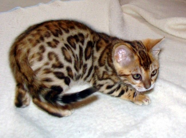 I want a kitty cat like that!