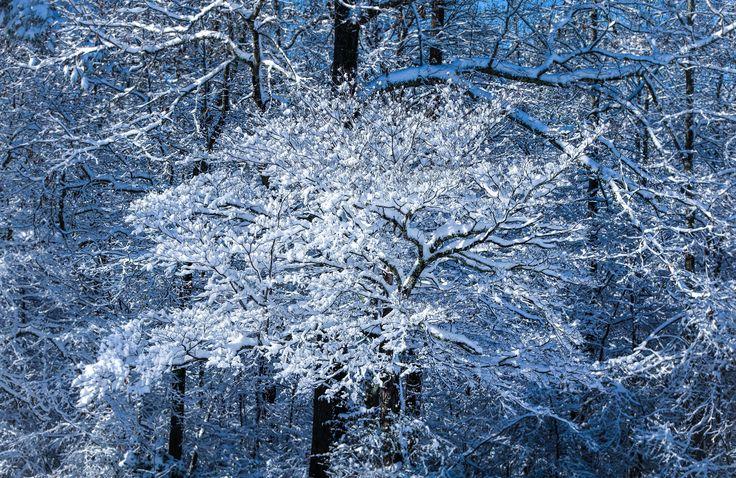 Snow in Atlanta Photography. (2017)