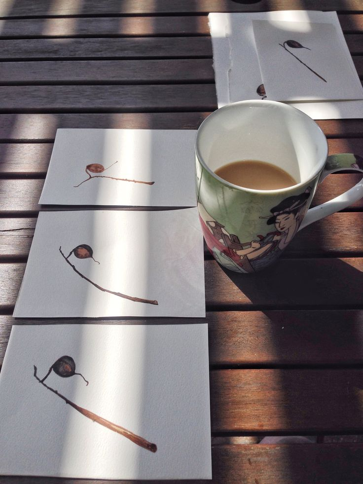 Coffee in the morning looking over yesterday's seed pod sketches. myaustraliangardenartresidency