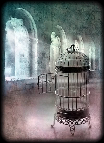 220 Best Beautiful Bird Cages Images On Pinterest