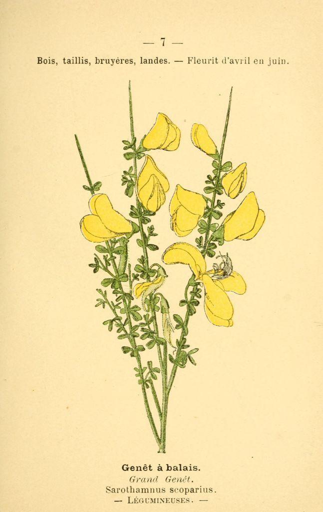 25 best ideas about dessin fleur on pinterest comment - Comment dessiner une fleur de lotus ...