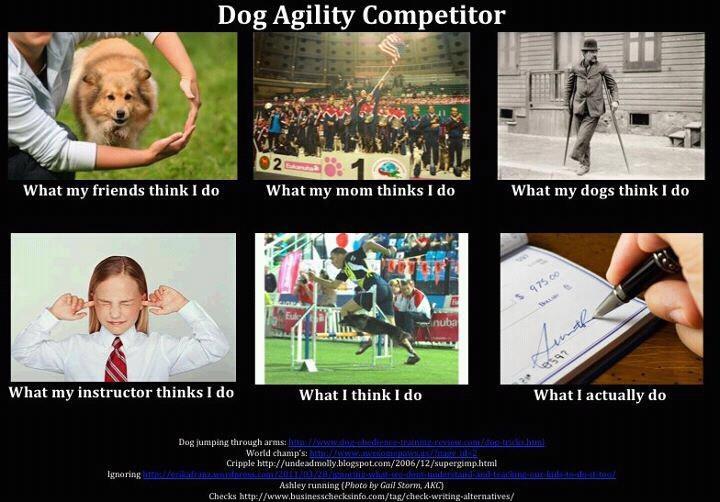 Dog Agility - what I do