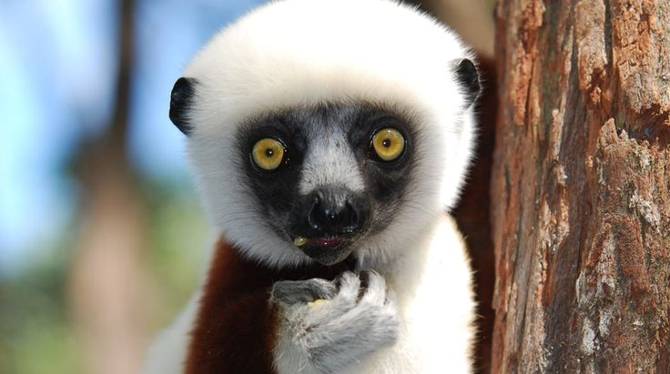 1000 Views of Madagascar | Bench Africa