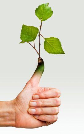 Aquaponic Gardening Rules of Thumb - FAQ