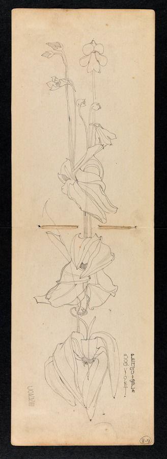 Hunterian Art Gallery Mackintosh collections: GLAHA 53012/4