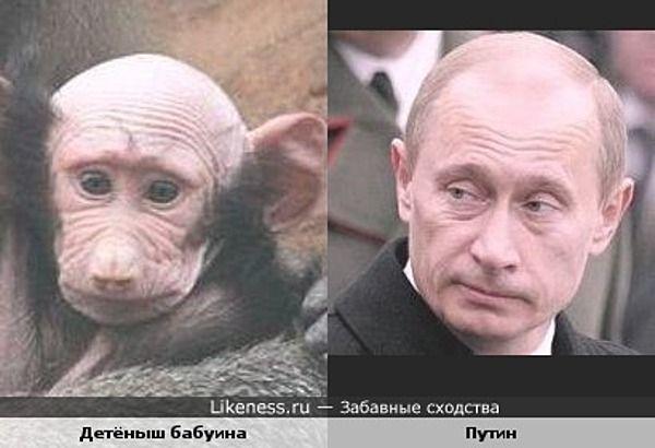Evolution?