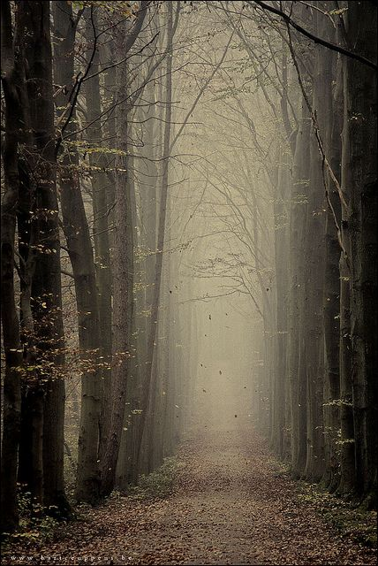 What does the woods hold in store for you?