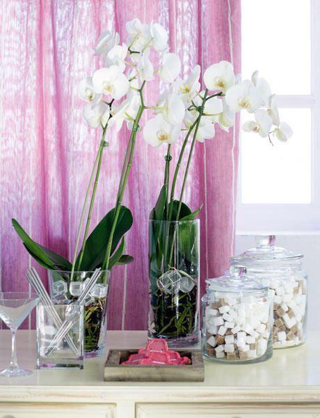 #Orquídeas blancas