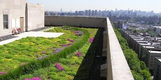 Cities, Sustainability & Communications: THE ABC/ Green roof