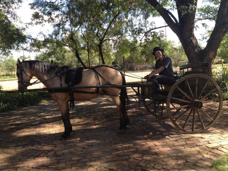 Horse and carriage at Die Akker