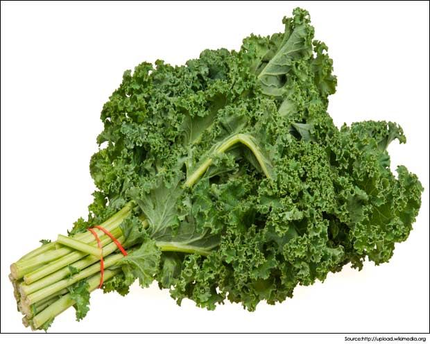 Is Curly Kale Good For Dogs