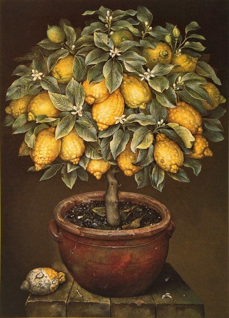 Lemon Tree in Blossom (José Escofet)