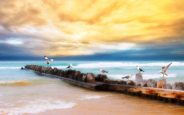 Скачать обои море, чайки, небо, hdr, берег, раздел в разрешении 1280x800