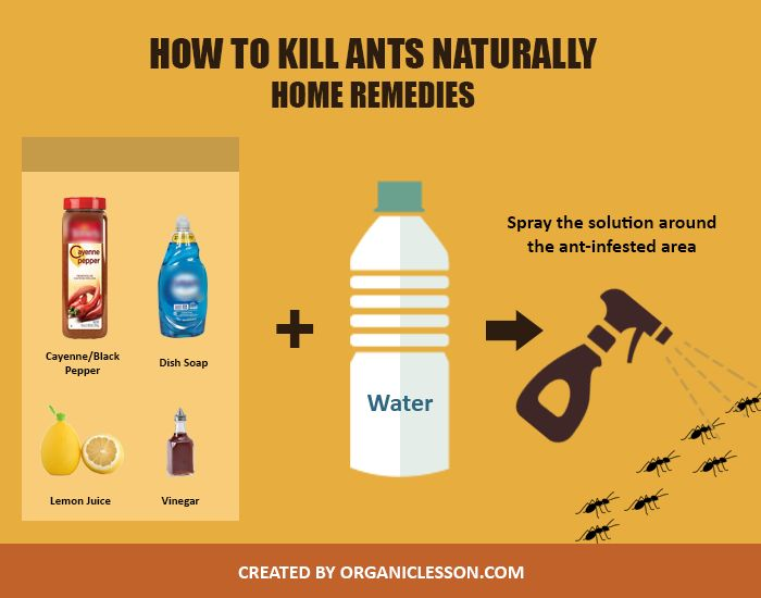 Use these simple home remedies to kill ants naturally (at home or outdoors).