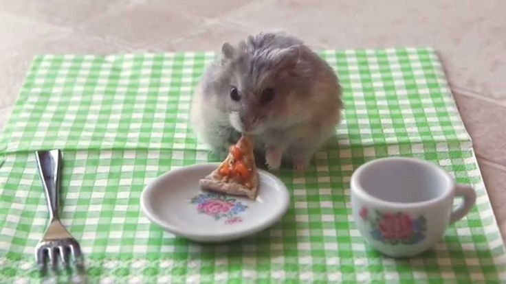 A Tiny Hamster Eating A Tiny Slice of Pizza