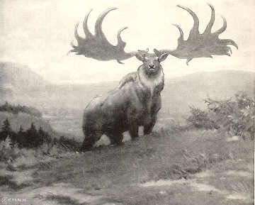 Irish Deer    Herds of the Giant Irish Deer lived in Europe and Ireland during the late Pleistocene until about 10,000 or 11,000 years ago.  It stood six feet high at its shoulders, the size of Moose, and its broad antlers spanned ten feet.