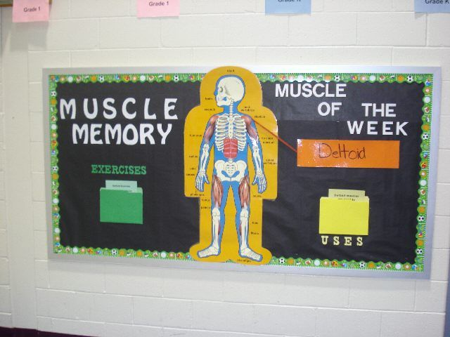 human bones Science Bulletin Board Ideas | Submitted by Jackie Ranieri who teaches at Lionville Elementary ...