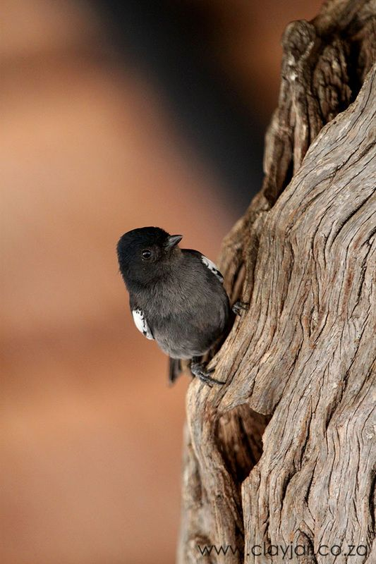 Bird in Kruger National Park - Cape Town Photographers   Clay Jar Photography