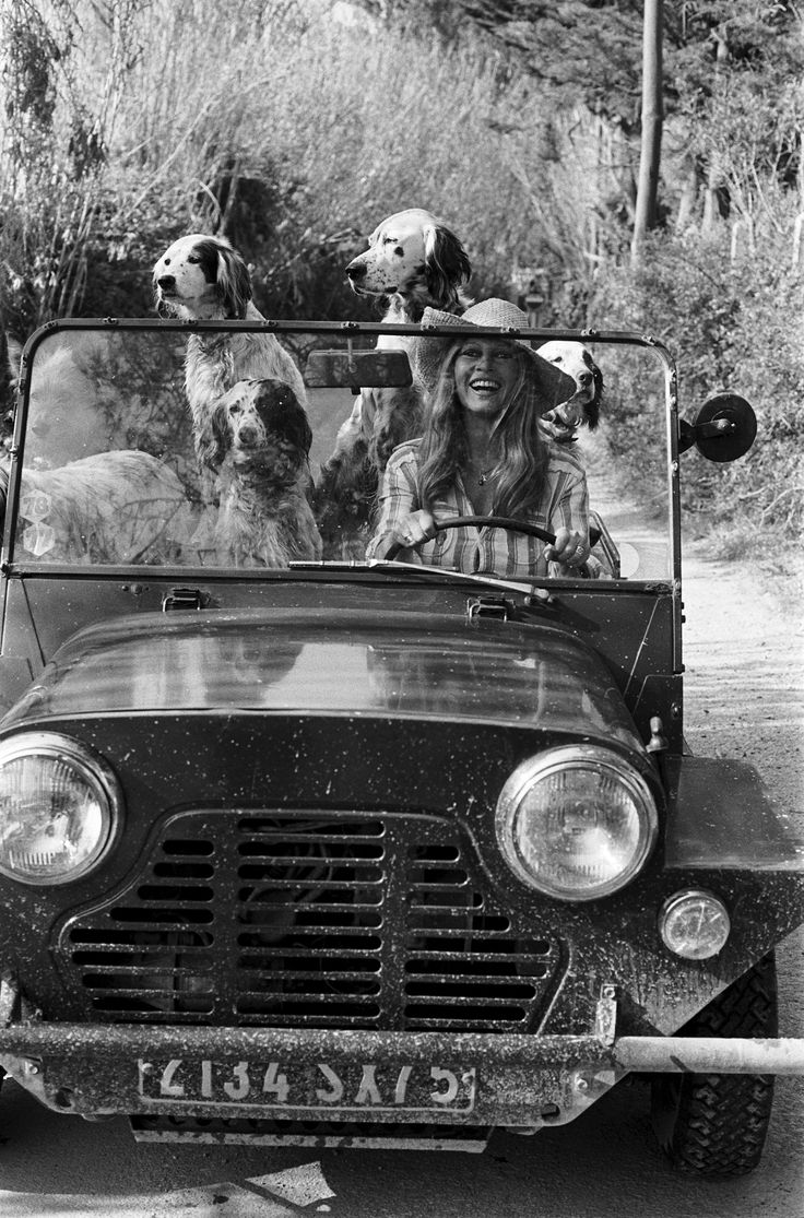 SAINT-TROPEZ -         Brigitte Bardot in her Austin Mini Moke, Saint-Tropez, 1960s... With a few dogs...