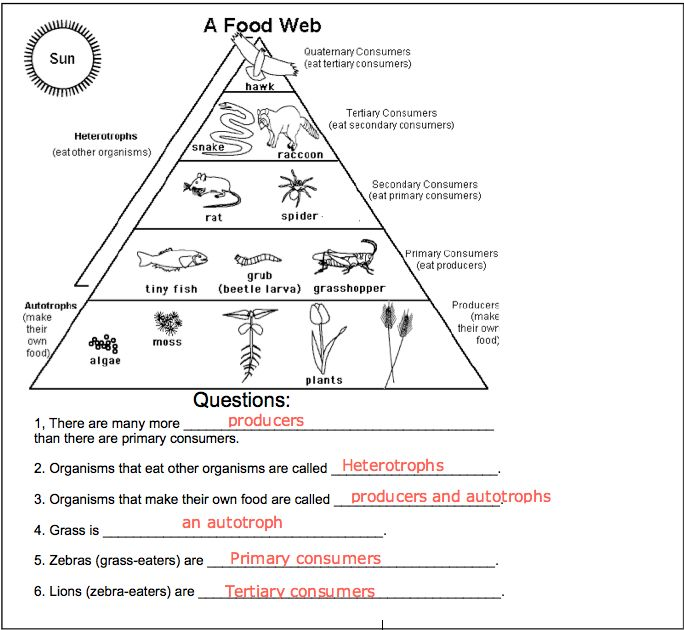 Worksheets Energy Pyramid Worksheet food chain pyramid worksheet tritec science learning community energy projects organisms roles