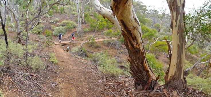 The Island in Werribee Gorge State Park is a moderately challenging 10.8 km / 4 hour hike, providing excellent views across the park.