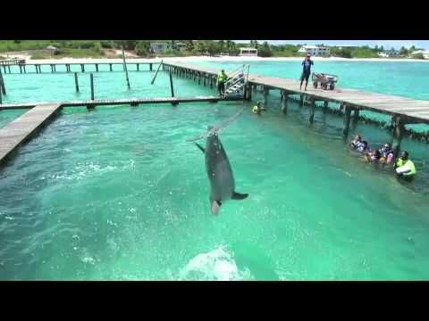 Dolphins Playing at Dolphin Discovery Anguilla, our first video from our newest location!    http://www.dolphindiscovery.com/anguilla/anguilla-location-overview.asp