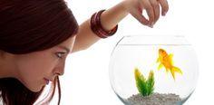 Feeding Goldfish: The Ultimate Goldfish Food Guide