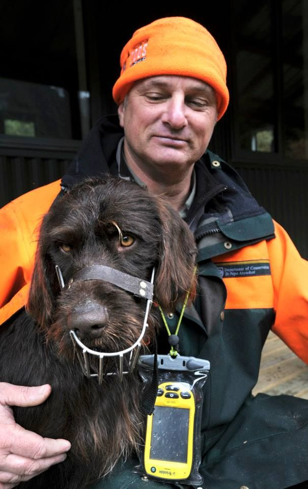 Ranger Max with Oska the conservation dog, getting ready to go find whio/blue duck in Fiordland National Park.