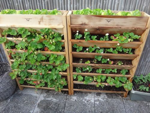 Self Watering Vertical Herb Garden Google Search Vertically Composting Pinterest Planters And