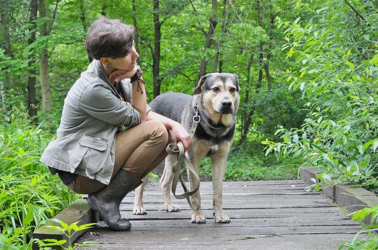 Брут Москва и МО. Добродушный, спокойный пес Брут ищет Дом! Очень крупный, мягкий и тактичный зверь - застенчивый мальчик в теле большой собаки. От такого большого и сильного пса сложно ждать столько подчинения и доверия, но Брут готов делать... #собака #собакаищетпомощь #собакаищетдом #собакаищетхозяина