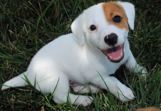 Smiling Puppy :)