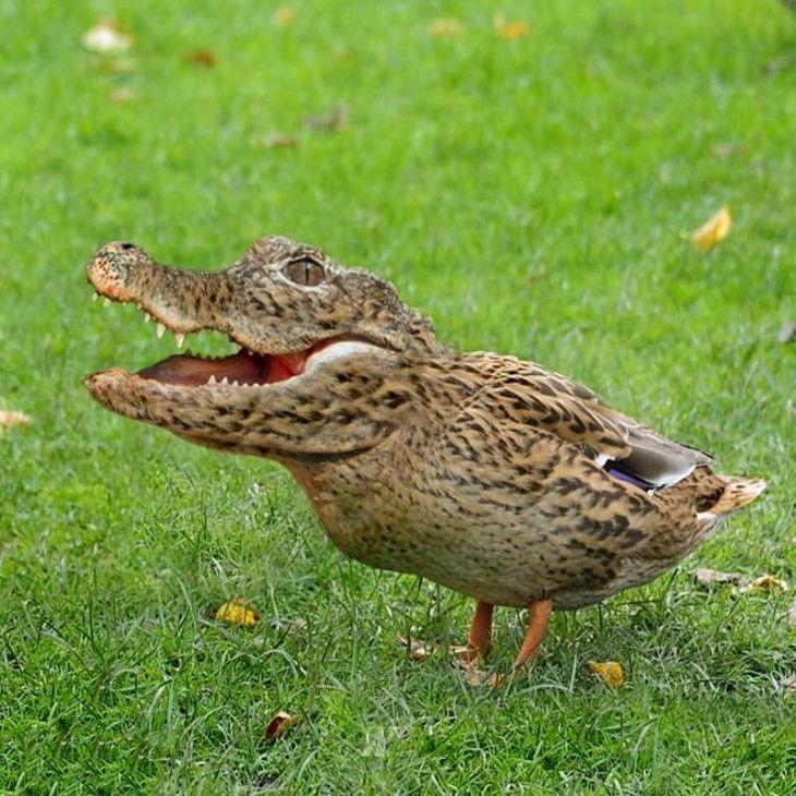 Pájaro Con Cabeza De Cocodrilo Sobre El Césped Animales Hibridos Animales Locos Humor Divertido Sobre Animales