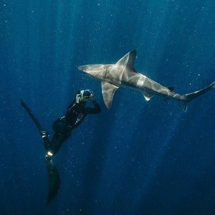 Shark Sunday: getting the shot. Whether on Scuba or freediving seeing sharks in the ocean is always incredible. Tag your shark pics with #DeeperBlue to be featured. .  @synima  #sharks #SharkSunday #sharkdiving #freedive #freediver #freedivingwithsharks #underwater #underwaterpics #underwaterphotography #freedivingphotography #freediving #onebreath #savesharks #oceans #saltlife #apnea #deeperblue #explore #waterlust #seas http://ift.tt/2tIs2UX