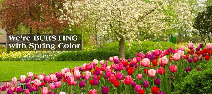 Long Island Nursery | Plants, Trees, Garden Nursery | Hicks Nurseries