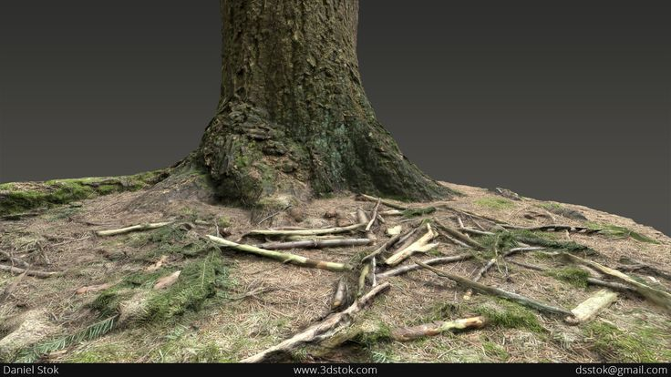 Artstation - Tree Trunk Photogrammetry, Daniel Stok