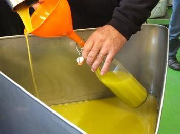 Tutti in difesa dell'olio di oliva: i produttori italiani respingono gli attacchi del New York Times - Olive oil producers - #NYT - #EVO