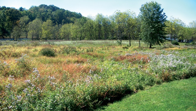 Naturalizing an area and creating a meadow provides food for pollinators and restores wildlife habitat. (Photo by Gloria Day)