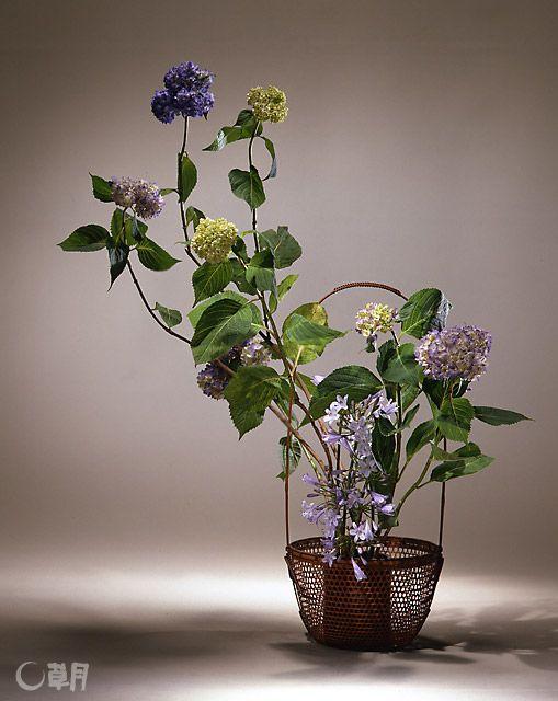透け感のある軽やかな印象の籠から、背伸びをするように伸び上がる勢いのあるあじさい。枝の表情をいかすことで、躍動感を演出しました。花材:あじさい、アガパンサス 花器:竹籠 Hydrangea vigorously reaches up out of the airy translucent basket. Their vitality in thrusting upward is emphasized by the expression of the stems. Material:Hydrangea, Agapanthus Container:Bamboo basket  #ikebana #sogetsu